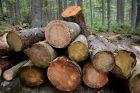 Pokácené dřevo, poleno, polena, kláda, klády, těžba dřeva (ilustrační foto)