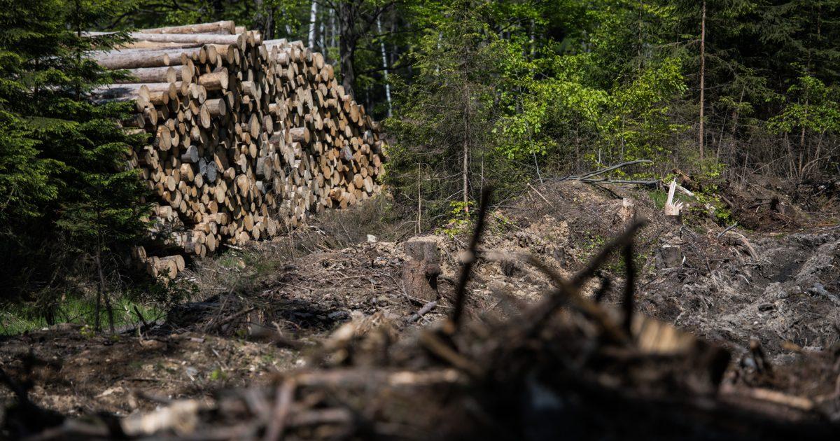Výběr z médií: kůrovec v brdských lesích, nákup bytů s majiteli a zdražování kvůli emisním povolenkám