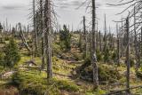 Zalesňování netypickým způsobem. Podnikatel z Pardubicka se snaží brát inspiraci z přírody