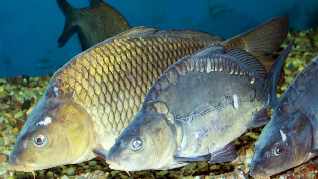 dd6e78de9b0a Podle jihočeských vědců se dají chovat tisíce ryb na malém prostoru s malým  množstvím vody