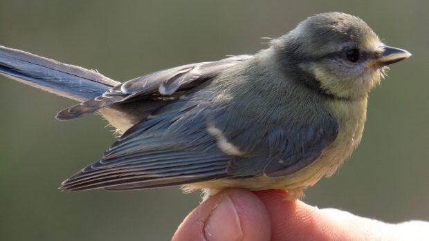 Velká velikost ptáka