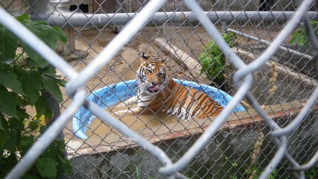 709b5367370 V plánu byl zookoutek s exotickou zvěří. Veterinární správa ho teď ...