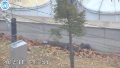 40 výstřelů a 7 kulek v těle. Prchající severokorejský voják se řítil na Jih 'jako ve filmu'
